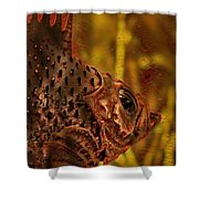 The Copper Rockfish Shower Curtain