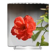 The Coral Rose Shower Curtain