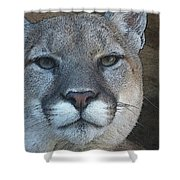 The Cougar 3 Shower Curtain