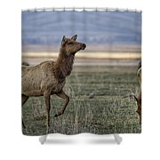 The Cow Elk Shower Curtain