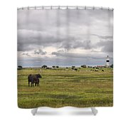 The Cows Of Ottenby 1 Shower Curtain