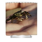 The Crab Shower Curtain