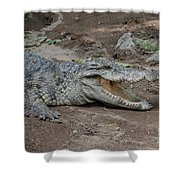 The Croc Shower Curtain
