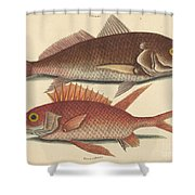 The Croker (perca Undulata) Shower Curtain
