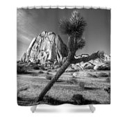 The Crooked Joshua Tree Shower Curtain