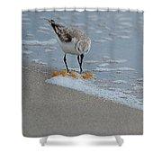The Curious Little Sanderling 1 Shower Curtain
