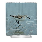 The Curious Little Sanderling 2 Shower Curtain
