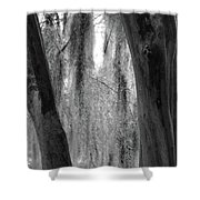 Cypress In The Bayou Shower Curtain
