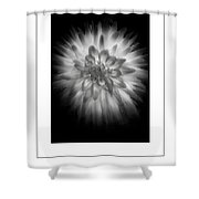 The Dahlia Bw Poster Shower Curtain