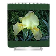 The Dainty Side Of An Iris Shower Curtain