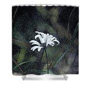 The Daisy Shower Curtain