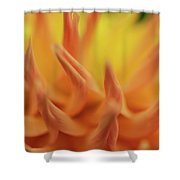 The Dance Of Nature Shower Curtain