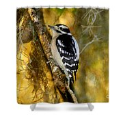 The Downy Woodpecker Shower Curtain