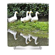 The Duck Gang Shower Curtain