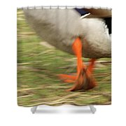 The Duck Strut Shower Curtain