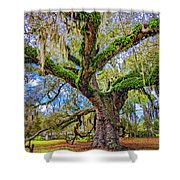 The Dueling Oak 2 Shower Curtain