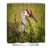 The Duo - Two Sandhill Cranes Shower Curtain