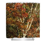 The Dying Leaves' Final Passion Shower Curtain