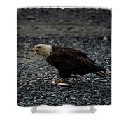 The Eagle And Its Prey Shower Curtain