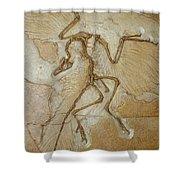 The Earliest Bird, Archaeopteryx Shower Curtain