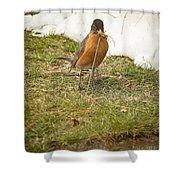 The Early Bird - Robin - Casper Wyoming Shower Curtain