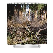 The Elusive Leopard Shower Curtain