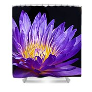 The Enchantress  Shower Curtain by Lori Frisch