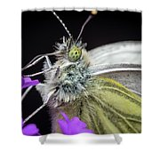 The Eye Of The Green-veined Butterfly. Shower Curtain
