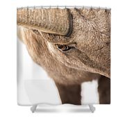 The Eye Of The Ram Shower Curtain