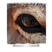 The Eye Of A Burro Shower Curtain