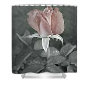 The Faded Rose Shower Curtain