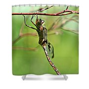 The Faery  Shower Curtain