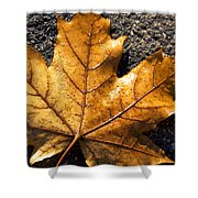 The Fall Of Autumn Shower Curtain