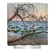 The Fallen Tree Shower Curtain