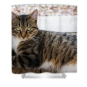 The Ferals-1412 Shower Curtain