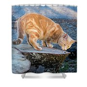 The Ferals-1451 Shower Curtain