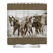The Fillies Shower Curtain
