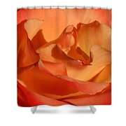 The Final Rose Of Summer Shower Curtain