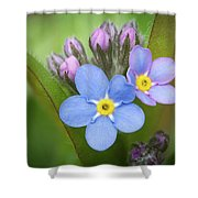 The First Blossom Of The Forget Me Not Shower Curtain