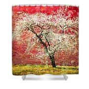 The First Blossoms Shower Curtain
