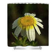 The First Light Shower Curtain