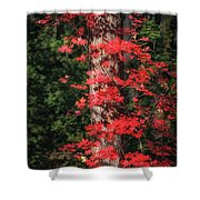 The First Maple Of Autumn Shower Curtain