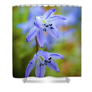 The First Spring Flowers Shower Curtain