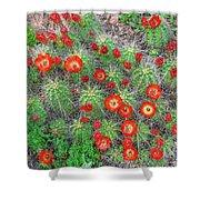 The First Week Of May, Claret Cup Cacti Begin To Bloom Throughout The Colorado Rockies.  Shower Curtain