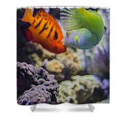 The Fish Kiss Shower Curtain