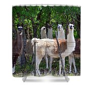 The Five Llamas Shower Curtain