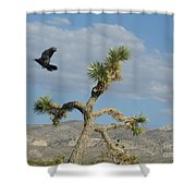 The Flight Of Raven. Lucerne Valley. Shower Curtain