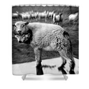 The Flock Is Safe Grayscale Shower Curtain