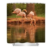 The Flock - The Serenity Of Flamingos At Water's Edge Shower Curtain