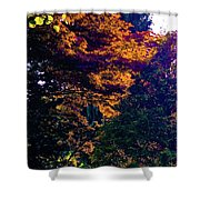 The Forest At Dusk Shower Curtain